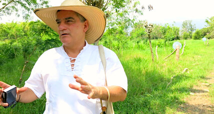 In Colombia, cows, crops and timber coexist